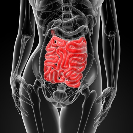 Leaky Gut Syndrome - Novato Functional Medicine